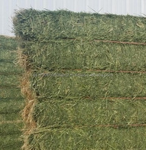 Alfalfa Hay, Rhodes Grass, Oats Hay Ready / Oats Hay for sale
