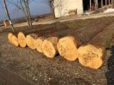 Red Oak, White Oak, Walnut and/or Hickory logs in prime/veneer quality Grade 1/a (4SC)