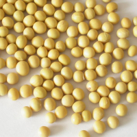 Certified Soybeans +Non gmo yellow soybean +soya bean seed