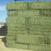 50kg/bag Packaging and 0.01%Admixture(%)high quality alfalfa hay, Alfafa Plant cheap prices