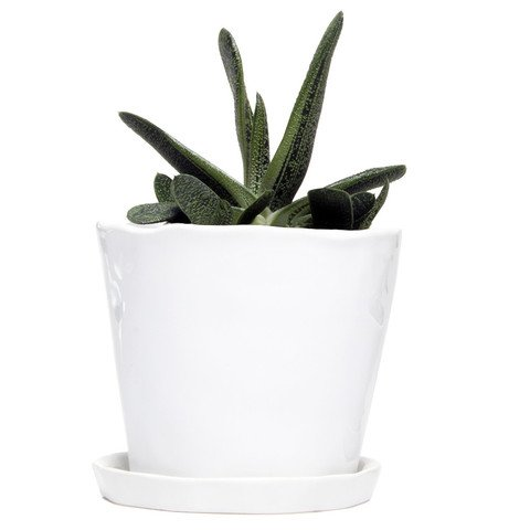 """Chive - Big Tika Succulent Planter - 5"""" Ceramic Plant Pot with Drainage Hole and Saucer, White"""