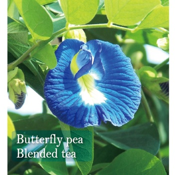 Herbal flower beauty butterfly pea tea for women health & medical japanese soft drink made in Japan oem  private label
