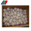 /product-detail/top-quality-wholesale-fresh-garlic-in-mesh-bag-62006019877.html
