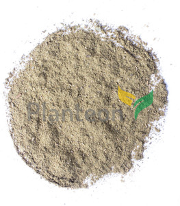 Oregano powder - Origanum vulgare