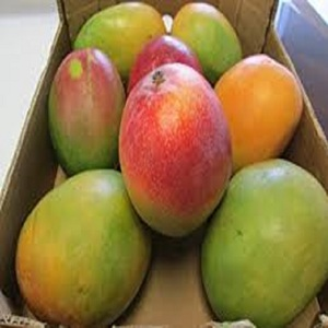 Red Mango Wholesale, Mango Suppliers - Alibaba