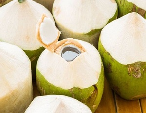 FRESH COCONUT EXPORT STANDARD PRICE FOR SALE HIGH QUALITY WITH BEST PRICE
