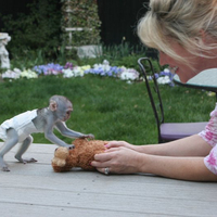 pure breed Capuchin monkeys for sale x mass