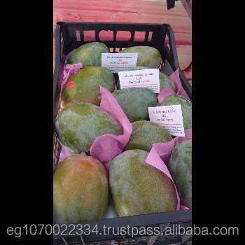 FRESH MANGO supplier
