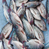 Sea Food Frozen Black Tilapia Fish with cheap price