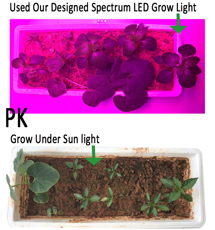 High Quality Hoticulture Plant LED Grow Lamps Indoor For Orchid Plant