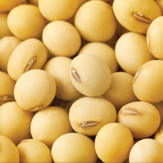 View larger image APPROVED!!! NON GMO SOYBEAN, SOYBEAN SEEDS, ORGANIC SOYBEAN SEEDS Add to CompareShare APPROVED!!! NON GMO S