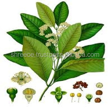 Best Quality in Low Price Bay Essential Oil from Shree Overseas Exports