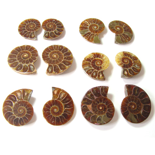 Ammonite Fossil natural Gemstone wholesale lot