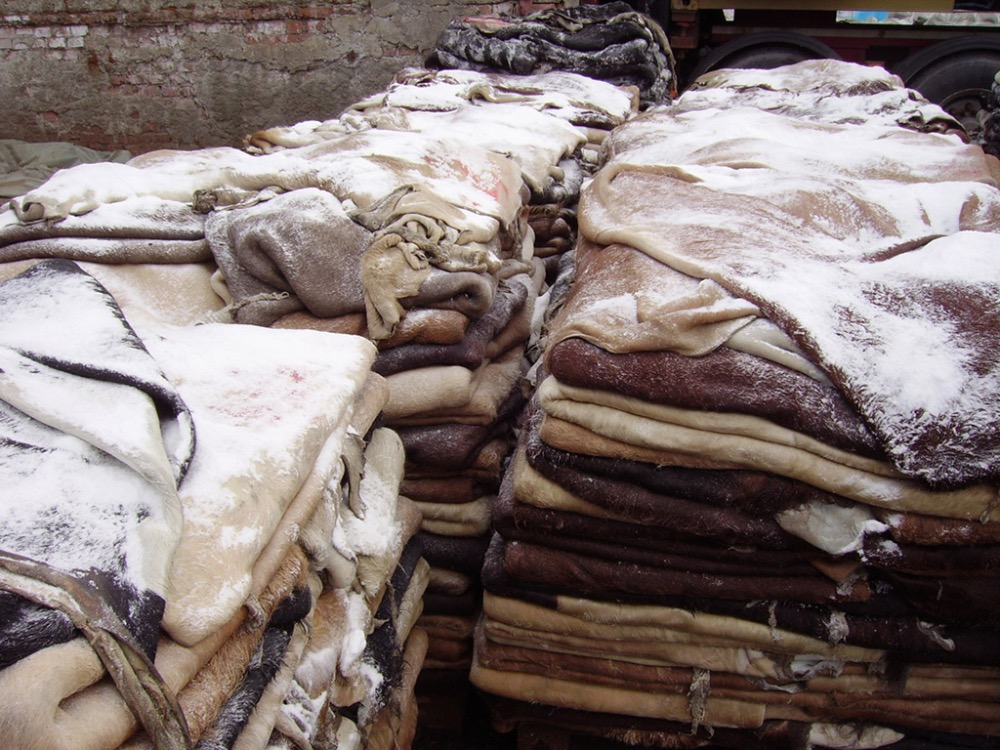 wet salted ox/heifer hides/Donkey /cow skin hide