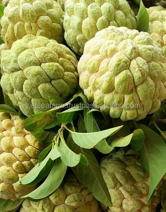 Fresh Custard Apple Fruit from Vietnam