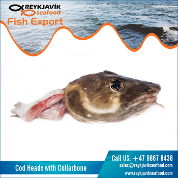 Cod Fish Heads with Collarbone
