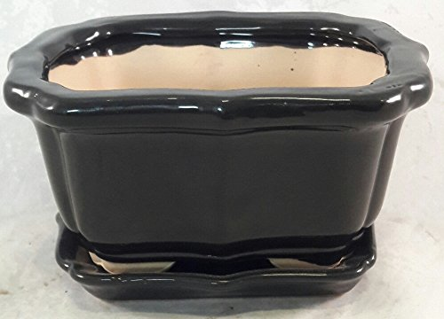 Buy Bonsai Tree Pot 6 Inch Bonsai Pots With Trays 3 Pack From Bonsaioutlet In Cheap Price On Alibaba Com
