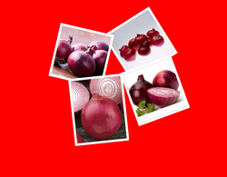 Red Onion Exporters In India by Bulk