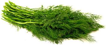 Dried and fresh Baby Dill/ Dill Weed