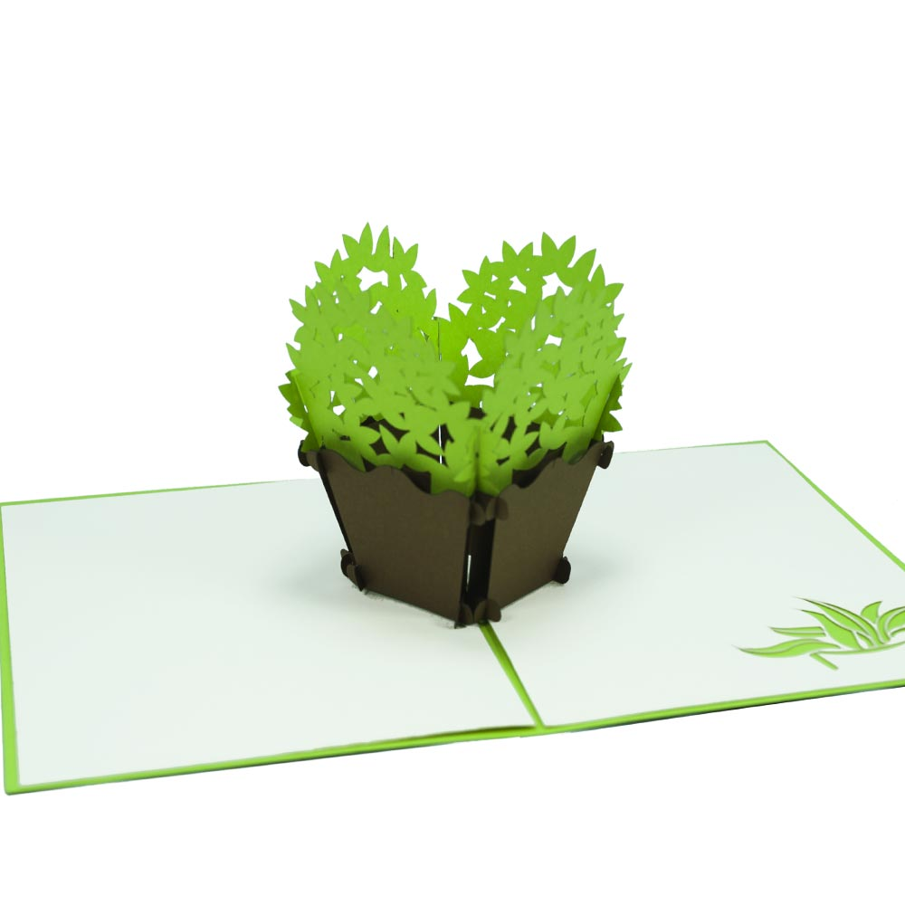 Basil Pop Up Card And Flower 3d Pop Up Kirigami Card And Birthday 3d