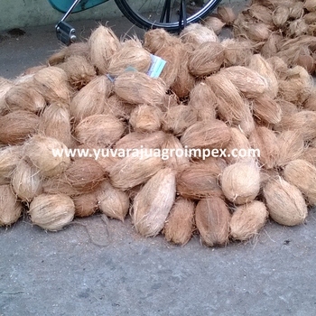 Fresh Semi Husked Coconut Exporters In India To South Africa / Uae /  Malaysia - Buy Semi Husked Coconut Size 13 Inch,Fresh Coconut In Bag,Best  Selling