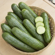 fresh cucumber sales