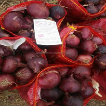 High quality lowest price fresh red onion for sale with fast delivery from KTC company