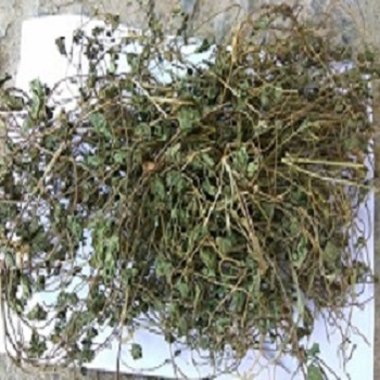 100 % Natural Gotukala Leaves Herbs - Buy Dry Herb,Natural Preservative  Herbs,Natural Herbs Candy Product on Alibaba com