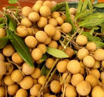 Wholesale Longan Fruit for Export