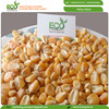 New Crop Bulk Dried Yellow Corn /Yellow Maize for Poultry Feed