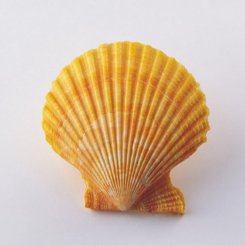 Seashell Powder From Vietnam with high quality, bulk quantity