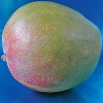 Pictures Of Tommy Atkins Mango
