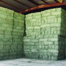 Quality Alfalfa and Timothy Hay for Sale
