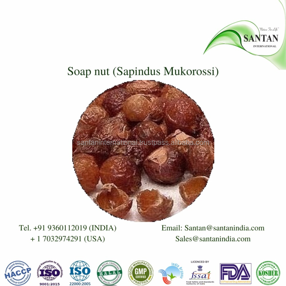 Soap nut (Sapindus Mukorossi) Soapberry Seeds Extract Soapnuts