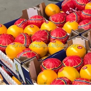 Fresh Clementines of Valencia Orange from Egypt