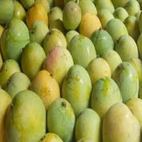 Fresh Mangos .Bulk Alphonso Mangoes Supplier In Germany