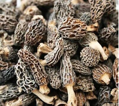 black morel mushroom market price dried morel mushroom for wholesale