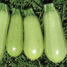 Fresh Vegetables Cucumber Exporter In India
