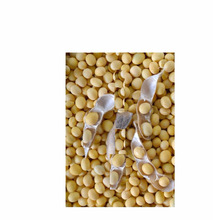 Top Quality Kidney Beans,Soybeans for importers