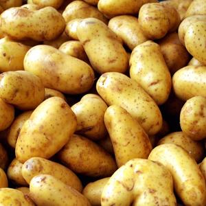 Belgium Potato Importers, Belgium Potato Importers