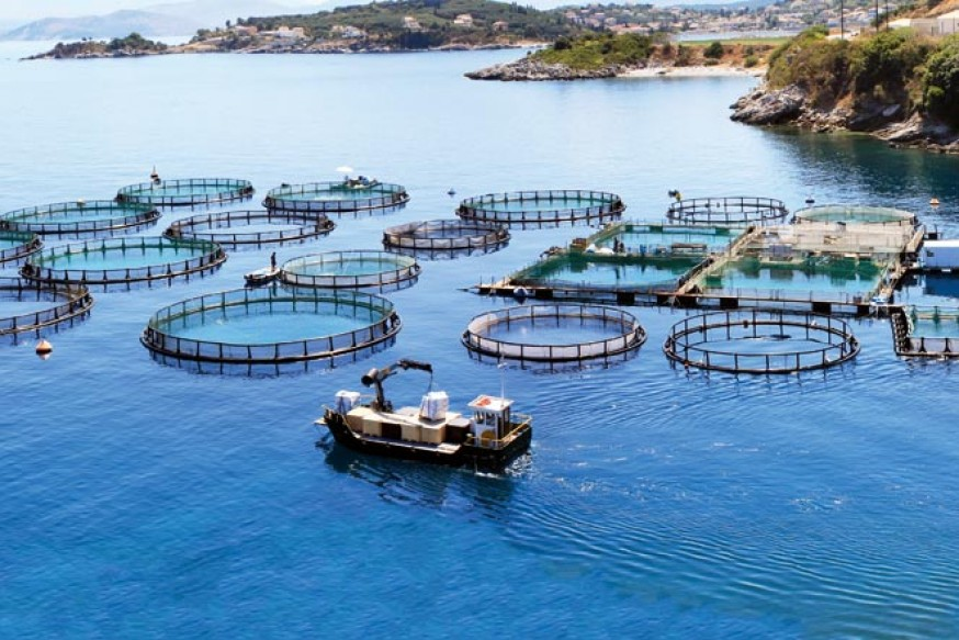 Рыбные фермы картинки