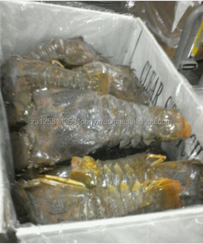 Live and Frozen Lobster whole & Tails