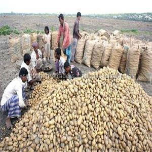High quality 100% Organic fresh Potatoes from Bangladesh