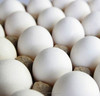 High Quality Fresh Chicken Eggs Ukraine