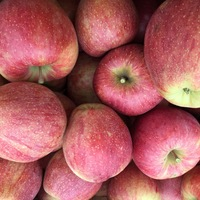 Fresh Apples/Royal Gala/Red Delicious/Granny smith