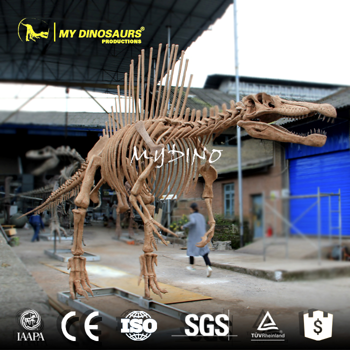 My-dino N22-13 Customized Life Size Spinosaurus Skeleton Replica