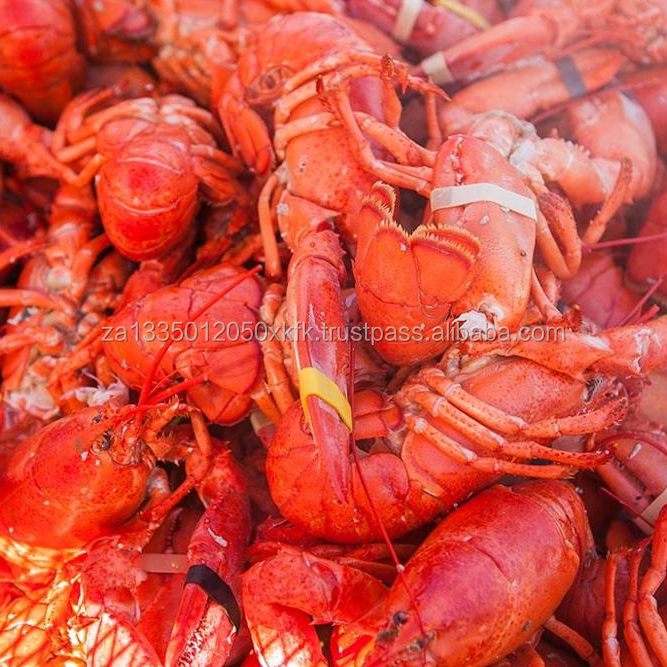 Frozen Whole Cooked Panulirus Argus - Spiny Lobsters - Buy Frozen Lobster  Meat,Frozen Lobster Head,Frozen Lobster Tails For Sale Product on