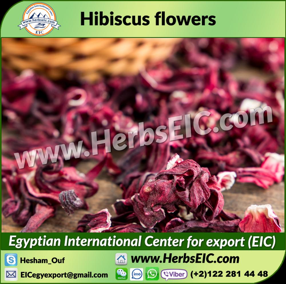 Hibiscus for export wholesale hibiscus suppliers alibaba izmirmasajfo
