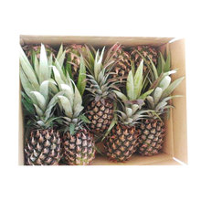 GRED AAA N36 FRESH PINEAPPLE FROM MALAYSIA FOR SALE AT BEST PRICE