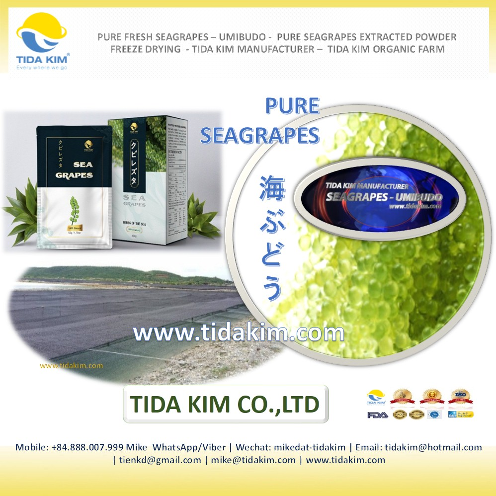 Fresh Sea Grapes - Umibudo - Tida Kim - Seaweed Green Caviar Okinawa Japan  Dehydrated Seagrapes - Caulerpa Lentillifera Extract - Buy Pure Fresh Sea